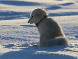 Arctic_lab_Yamal_3